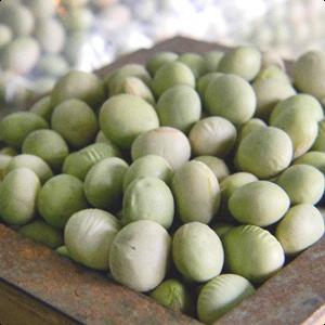 山形県産「秘伝豆」