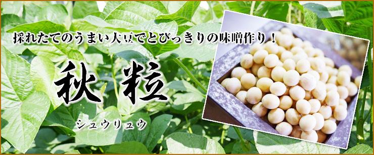 味噌用大豆 秋粒