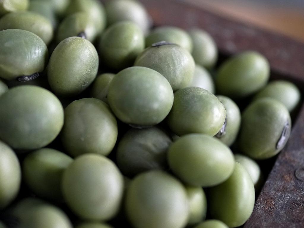 青肌豆 大粒(10kg)