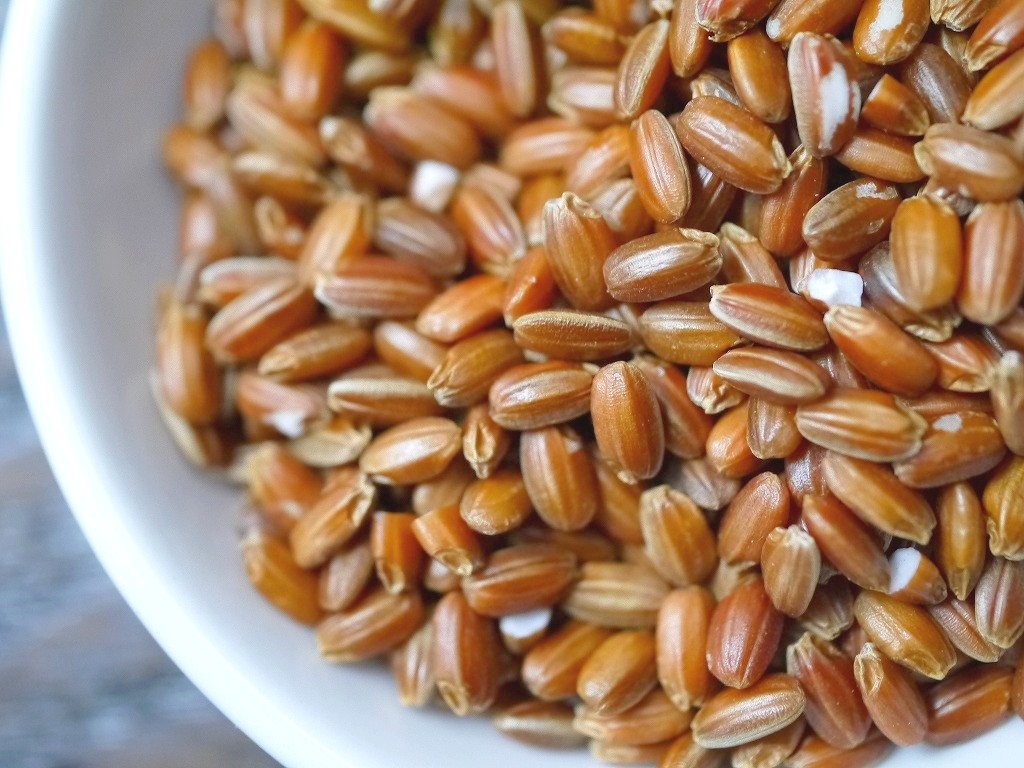 古代米 赤米もち米 夕やけもち(1kg)