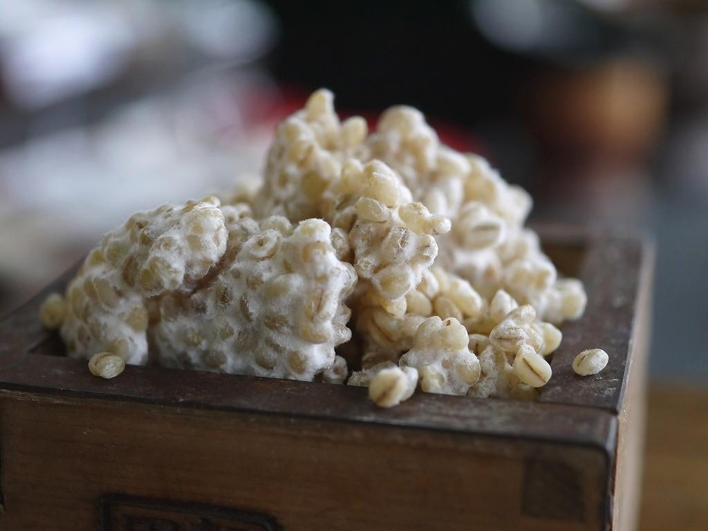 大麦塩麹(800g)送料無料 同梱不可 お試し ネコポス