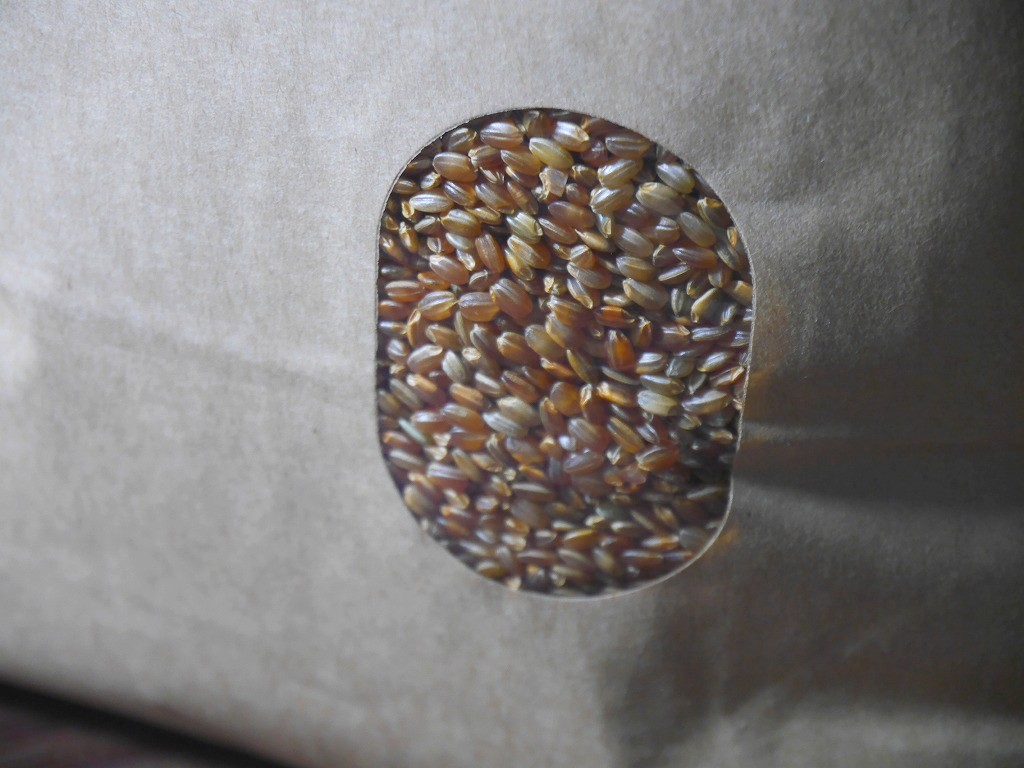 古代米 無農薬 有機肥料 赤うるち米 紅ロマン(5kg)