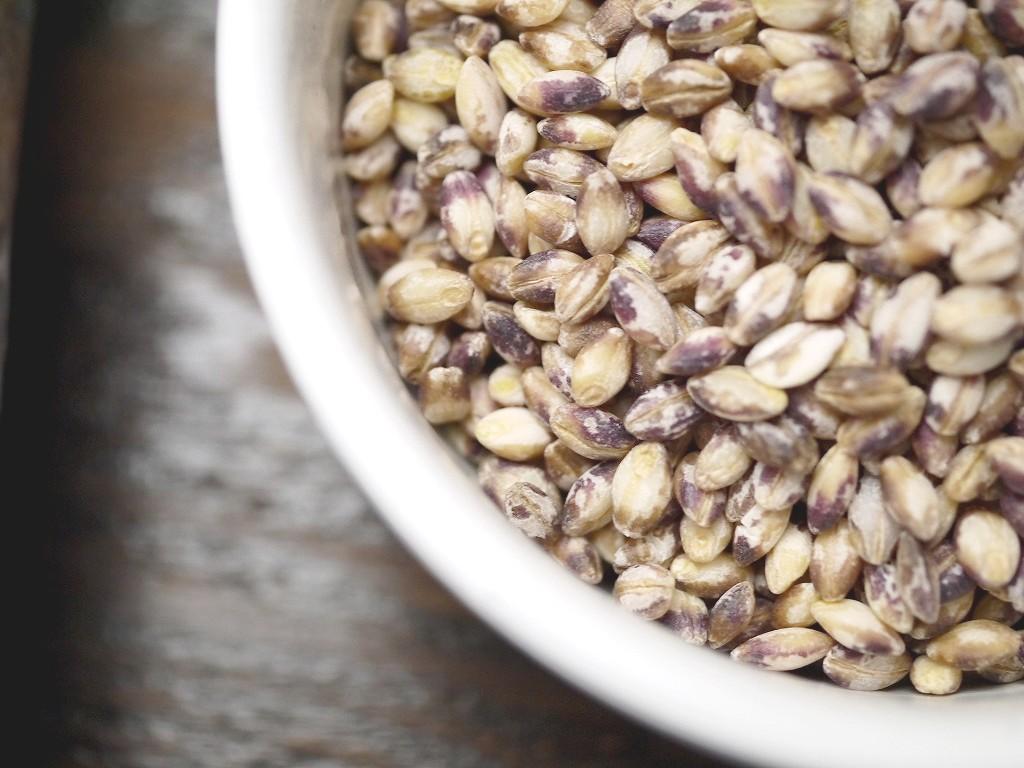 もち麦 ダイシモチ 紫(800g)