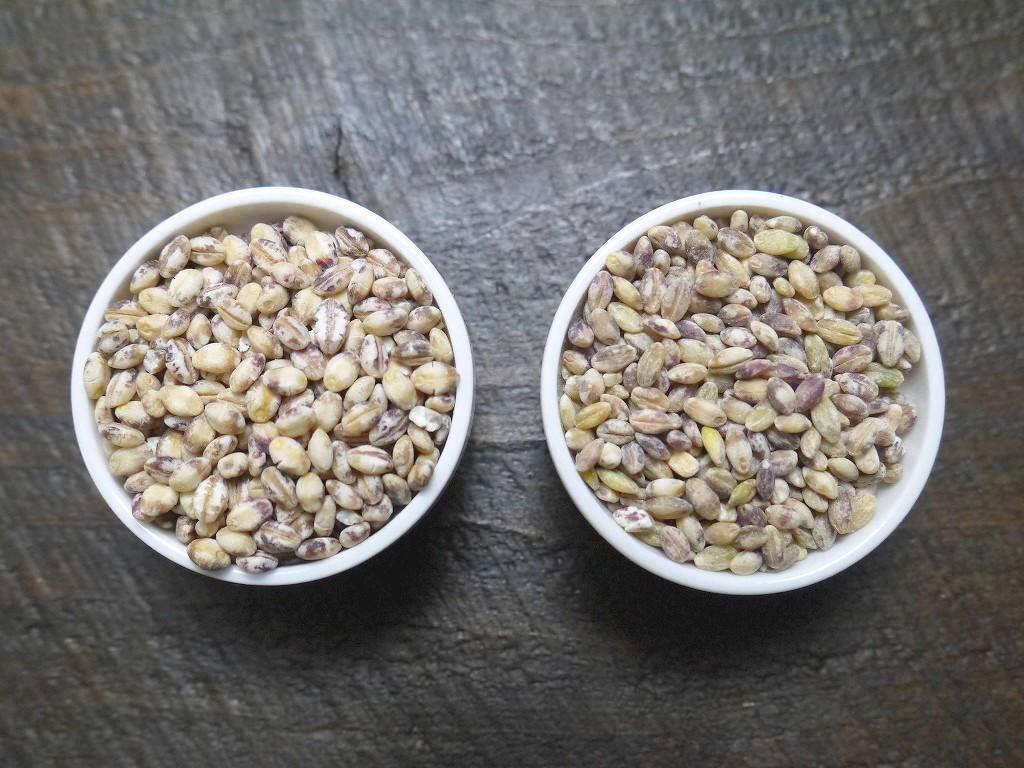 訳あり もち麦 ダイシモチ 紫(30kg)