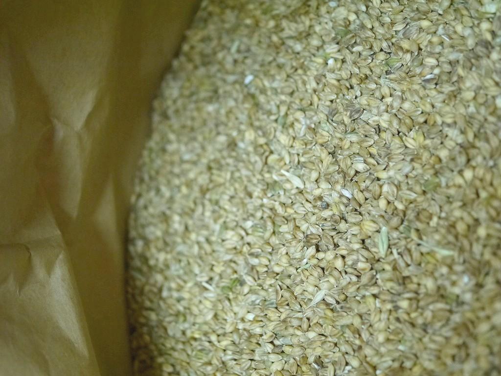 【訳あり】玄麦(無調整)30kg詰