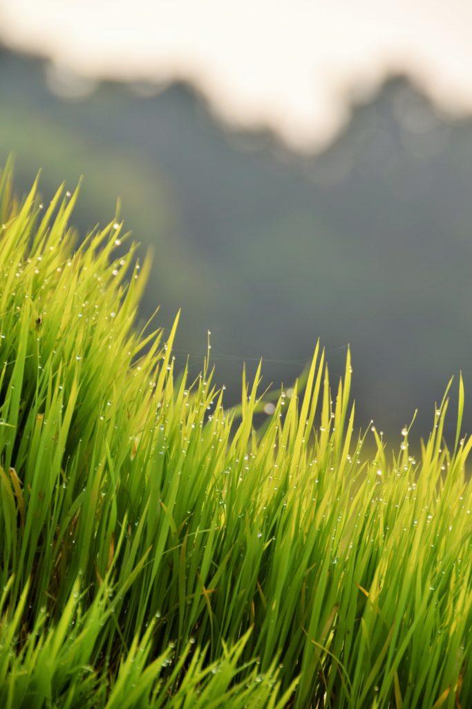 無農薬 有機肥料 令和元年産 コシヒカリ3升 白米(4.5kg)