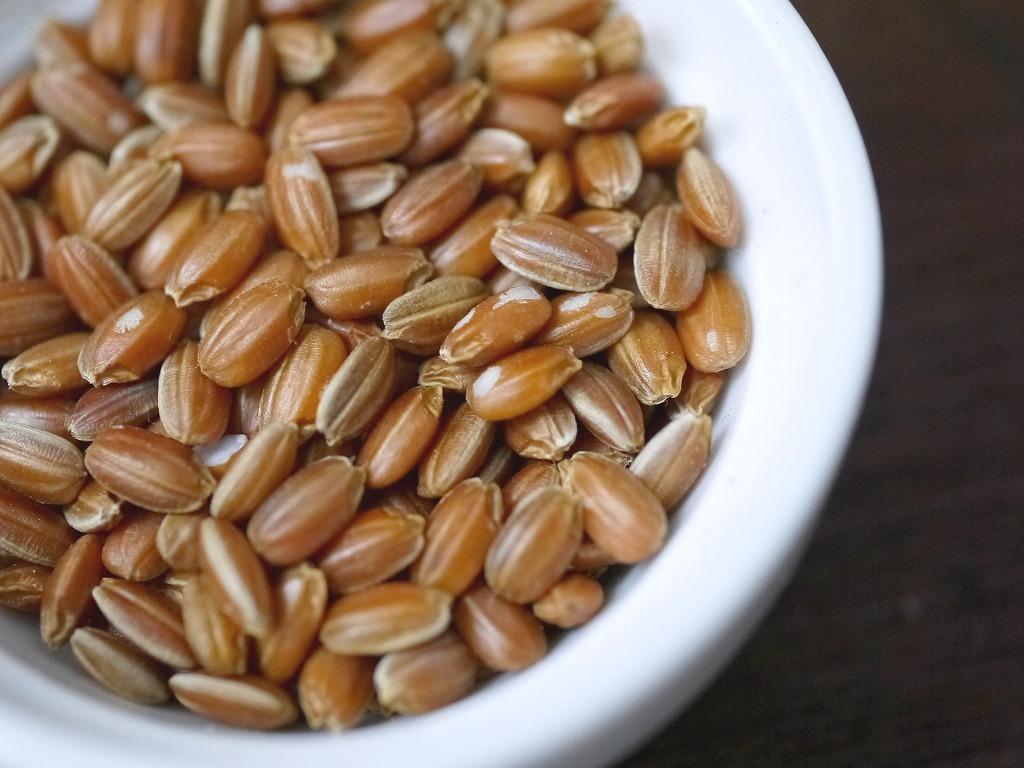 古代米 赤米もち米 夕やけもち(5kg)