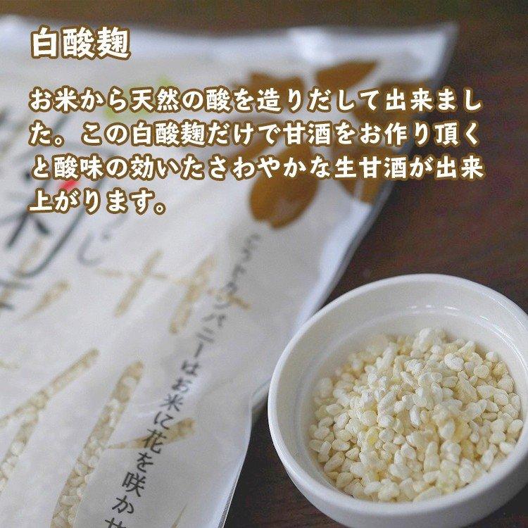 白酸麹 お米から天然の酸を造りだして出来ました。この白酸麹だけで甘酒をお作り頂くと酸味の効いたさわやかな生甘酒が出来上がります。