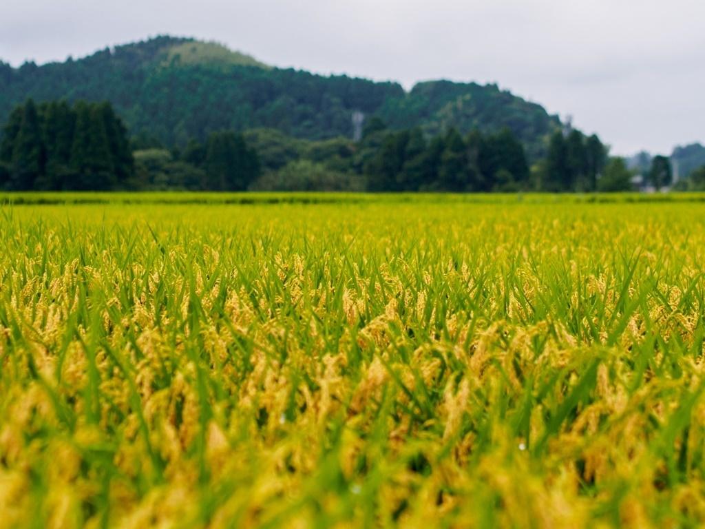 無農薬 有機肥料 令和3年産 コシヒカリ3升 白米(4.5kg)