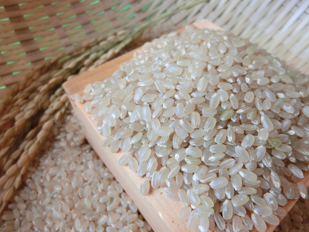 無農薬 有機肥料 令和2年産 コシヒカリ 玄米(30kg)